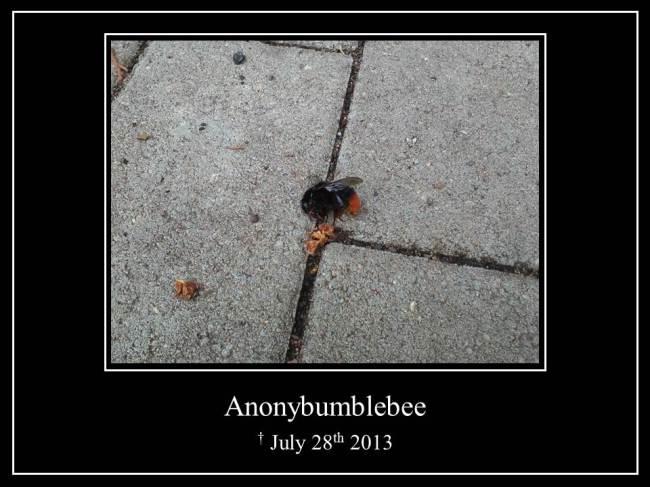 Anonybumblebee